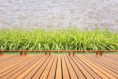 Decking o suelo y planta de madera en el jardín decorativo fotografía de archivo