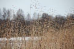 Deckt kalten Winterwind mit Schilf Lizenzfreie Stockbilder