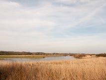 deckt Naturwachsende Seitenbank des Flussflusswasser-Himmelblau-Wolkenfrühlingshintergrundes mit Schilf lizenzfreies stockbild