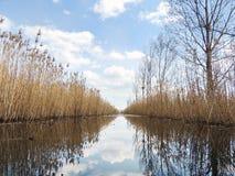 Deckt Reflexion im ruhigen Sumpfwasser mit Schilf Lizenzfreies Stockbild