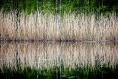 Deckt Reflexionen im Wasser mit Schilf Lizenzfreie Stockfotografie