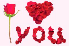 Declaration of love with rose. Petals isolated on white royalty free stock photo