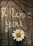 Declaration of love on a wooden texture with flower. Declaration of love on a wooden texture with chamomile Royalty Free Stock Photos