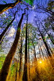 Declduous Dipterocarp Forest with sunset Royalty Free Stock Photography