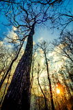 Declduous Dipterocarp Forest with sunset Stock Images