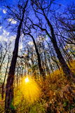 Declduous Dipterocarp Forest with sunset Royalty Free Stock Photo