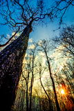 Declduous Dipterocarp Forest with sunset Stock Image