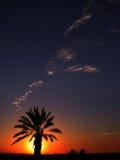 Declinación en desierto Foto de archivo
