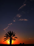 Decline in desert. Palm tree and clouds on a background of a decline Stock Photo