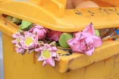 Decline of faith. Lotus in the public bin at temple royalty free stock images