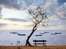 Decline  with a kind on a tree and. Decline in a lagoon and with a kind on a tree and a bench Stock Photos