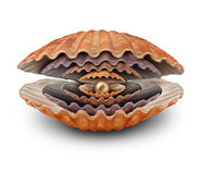 Declining Wealth. Business symbol for reduction in prosperity as a group of gradually shrinking open clam shells with a small pearl inside as a misfortune Stock Photography