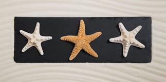 夏天海滩概念:在黑人委员会的三个海星deco的 库存照片