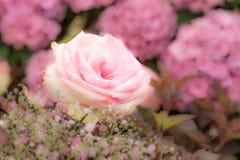Deco de la flor con las rosas rosadas Imagen de archivo