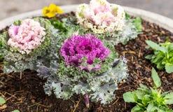 deco kleur Bloemen installaties Kool 6 royalty-vrije stock afbeeldingen