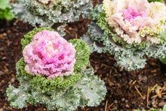 deco kleur Bloemen installaties Kool 5 royalty-vrije stock fotografie
