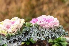 deco kleur Bloemen installaties Kool 4 royalty-vrije stock afbeeldingen