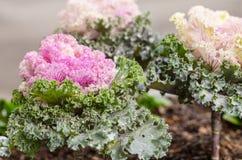 deco kleur Bloemen installaties Kool 3 royalty-vrije stock afbeeldingen