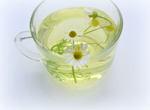 Decoction with the  chamomile Stock Photos