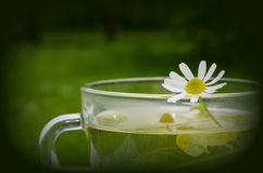 Decoction with the  chamomile Royalty Free Stock Photography