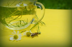 Decoction with the  chamomile Royalty Free Stock Photos