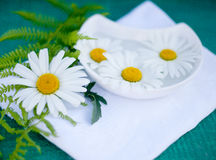 Decoction of chamomile health. Camomile tea for spa treatments and moisturizing Royalty Free Stock Photo