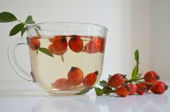 Decoction with dog rose in a cup Stock Images