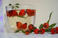 Decoction with dog rose in a cup Stock Photos