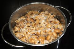 Decoction of mushrooms Armillaria honey agaric Royalty Free Stock Photography