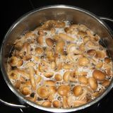 Decoction of mushrooms Armillaria honey agaric Royalty Free Stock Image