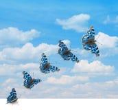 Decolagem da borboleta Imagens de Stock