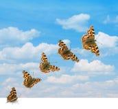 Decolagem da borboleta Fotos de Stock