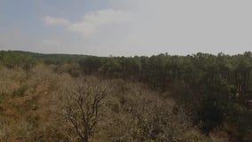 Decolagem na frente das árvores inoperantes vídeos de arquivo