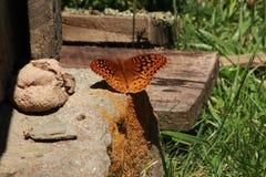 Decolagem preflight da borboleta imagens de stock royalty free