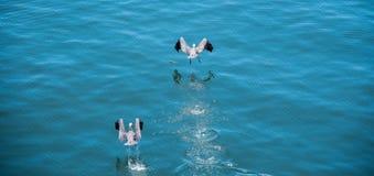 Decollo degli uccelli Fotografia Stock Libera da Diritti