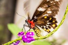 Decollo variopinto della farfalla immagini stock libere da diritti