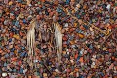 Decomposing kościec Bezgłowy Nieżywy ptak Kłaść dalej i ciało zdjęcie stock