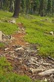 Decomposing tree Stock Photo