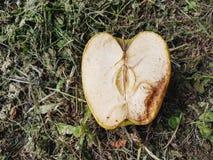 Decompositie van een appel stock afbeelding