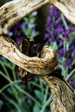 Decomposition of a butterfly eaten by ants. On a tree branch with colorful background stock photography