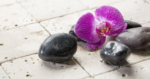 Decor for beauty spa treatment. Spa and beauty concept - series of black massage pebbles with orchid petals on pure mineral background for body care stock photography