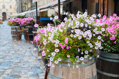 Decor flowers cafe on the street of Lviv Stock Photo