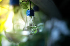 Decor of a glass bulb. Plants in a lamp with a blurred background. Royalty Free Stock Images