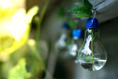 Decor of a glass bulb. Plants in a lamp with a blurred background. Stock Photo