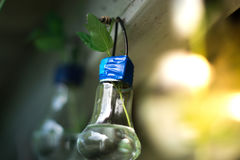 Decor of a glass bulb. Plants in a lamp with a blurred background. Stock Images