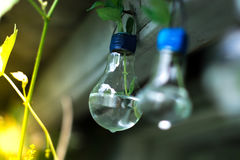 Decor of a glass bulb. Plants in a lamp with a blurred background. Stock Photography