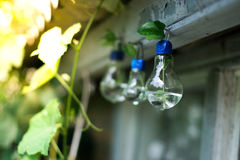 Decor of a glass bulb. Plants in a lamp with a blurred background. Royalty Free Stock Photos