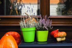 Decor near house with pumpkins, potted heather and lavender stock images