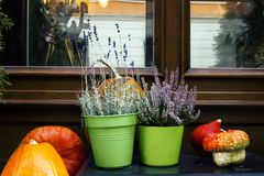Decor near house with pumpkins, potted heather and lavender stock photography