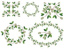 Decor with olive branches. Stock Photography